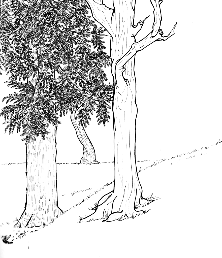 sketchbbookSCAN 6